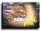 Pawsitively Pets