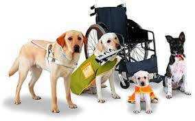 variety of service dogs