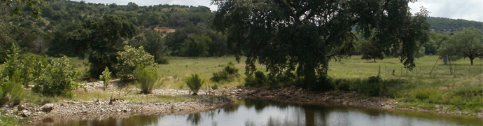 Blanco Creek - Uvalde County