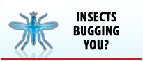 Insects Bugging You?